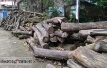 শিবগঞ্জে বন বিভাগের অবহেলায় অযত্নে নষ্ট হচ্ছে লক্ষ লক্ষ টাকার কাঠ