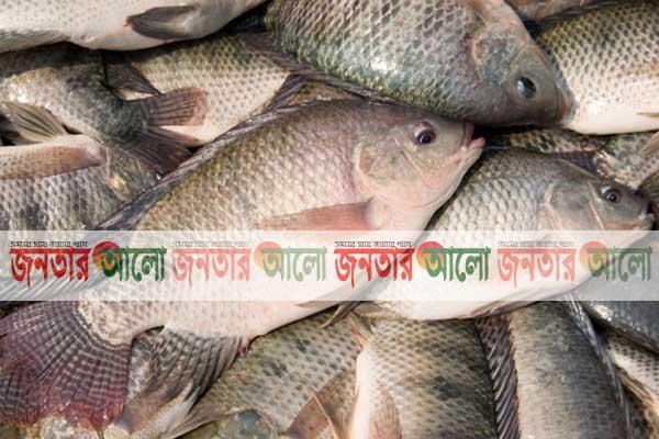 দিনাজপুরের নবাবগঞ্জে তেলাপিয়া মাছ চাষে প্রশিক্ষণ